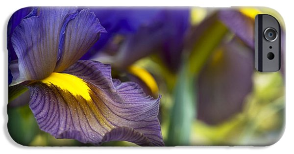 Iris Hollandica Eye Of The Tiger IPhone Case by Tim Gainey