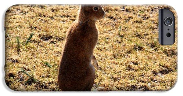 Irish Mountain Hare IPhone Case by Aidan Moran