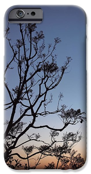 Jacaranda Sunset IPhone Case by Rona Black