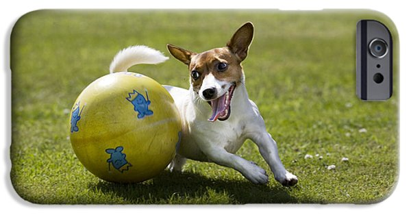 Jack Russell Terrier Plays With Ball IPhone Case by Johan De Meester