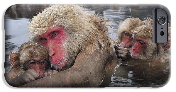 Japanese Macaque Grooming Mother IPhone Case by Thomas Marent