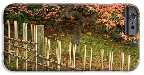 Japanese Maple, Acer Palmatum, In Fall IPhone Case by William Sutton