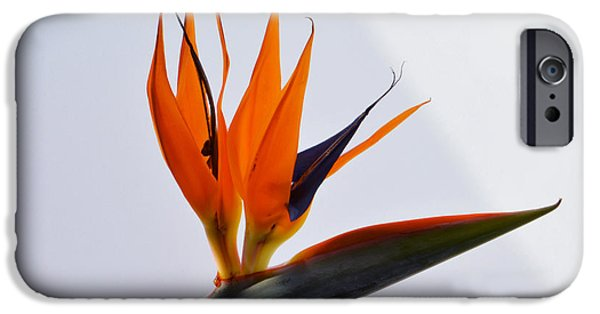 Jewel Of The Tropics. IPhone Case by Terence Davis