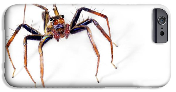 Jumping Spider IPhone Case by Alex Hyde
