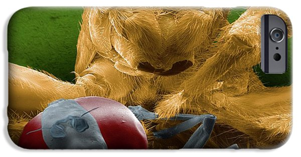 Jumping Spider Catching Prey IPhone Case by Thierry Berrod, Mona Lisa Production