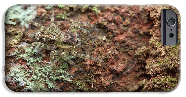 Jumping Spider IPhone Case by Melvyn Yeo