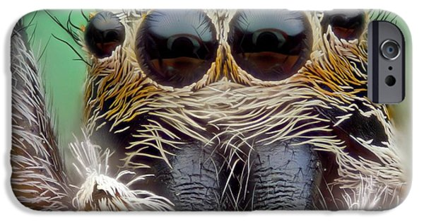 Jumping Spider IPhone Case by Nicolas Reusens