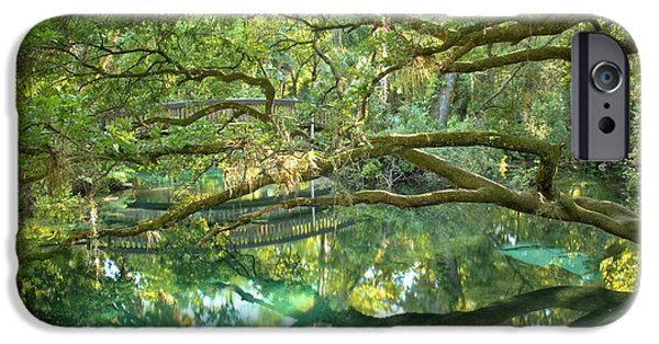 Juniper Springs Fern Hammock IPhone Case by Adam Jewell