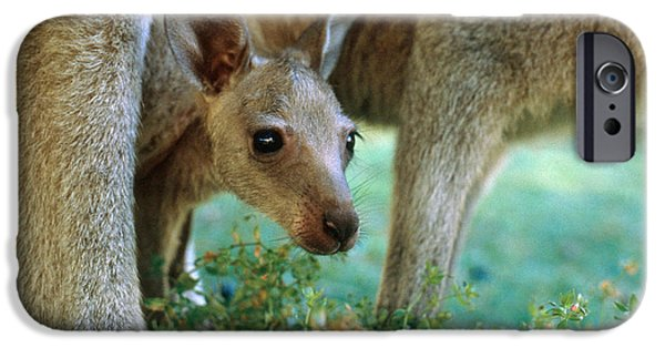 Kangaroo Joey IPhone 6s Case by Mark Newman