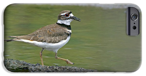 Killdeer Walking IPhone 6s Case by Sharon Talson