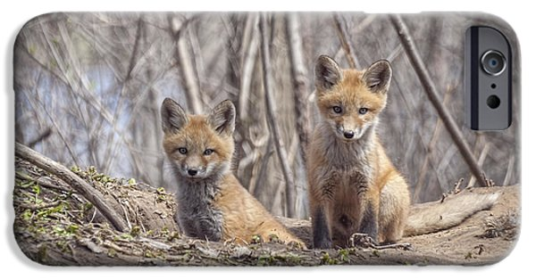 Kit Foxes 2011-1 IPhone Case by Thomas Young