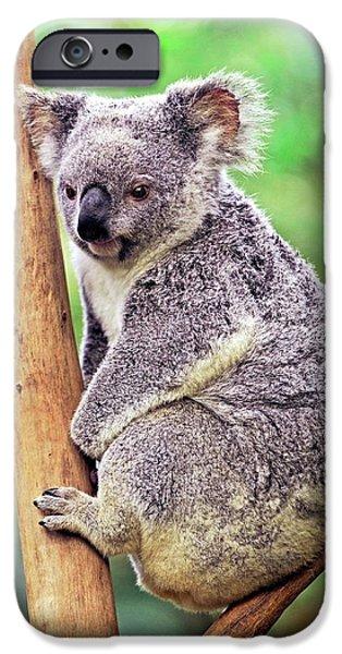 Koala In A Tree IPhone 6s Case by Bildagentur-online/mcphoto-schulz