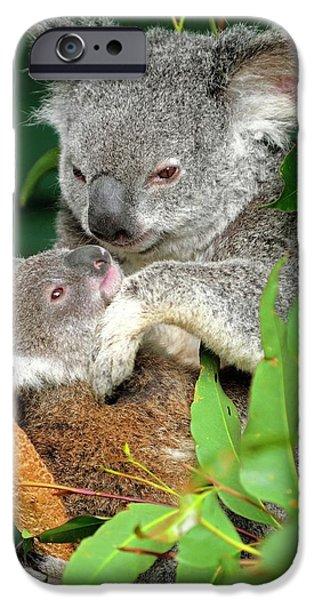 Koalas IPhone 6s Case by Bildagentur-online/mcphoto-schulz