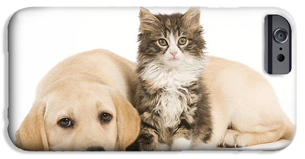 Labrador And Forest Cat IPhone Case by Jean-Michel Labat