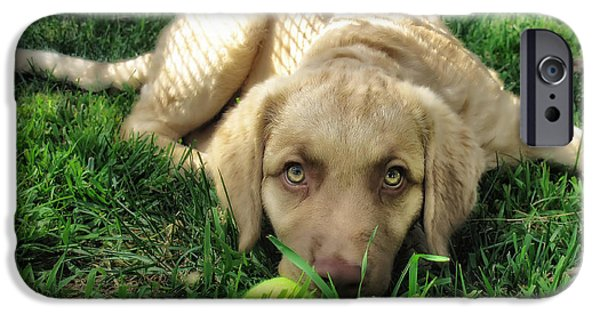Labrador Puppy IPhone Case by Larry Marshall