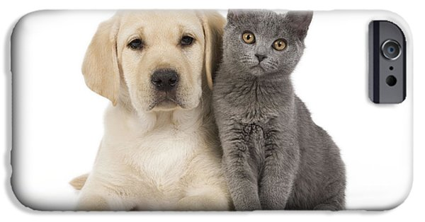 Labrador Puppy With Chartreux Kitten IPhone Case by Jean-Michel Labat