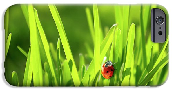 Ladybug In Grass IPhone Case by Carlos Caetano