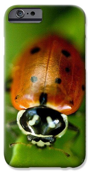 Ladybug On Green IPhone 6s Case by Iris Richardson