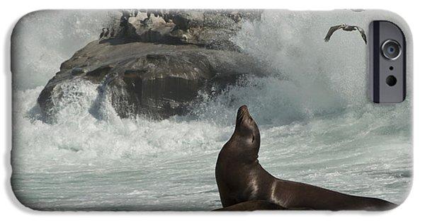Lajolla Surf N Nature Preserve IPhone Case by Daniel Hebard