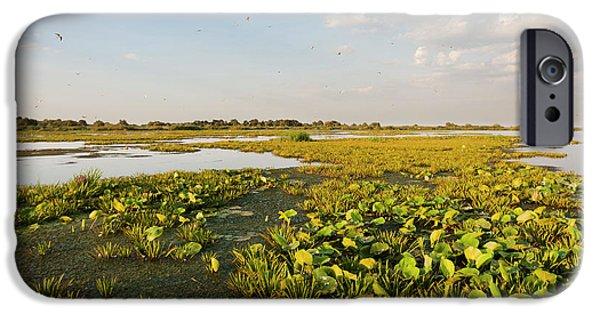 Lake In The Danube Delta, Romania IPhone Case by Martin Zwick