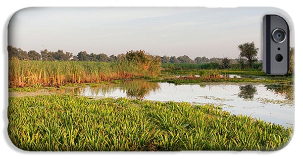 Lake With Aquatic Plants In The Danube IPhone Case by Martin Zwick