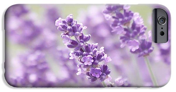 Lavender Dreams IPhone Case by Kim Hojnacki
