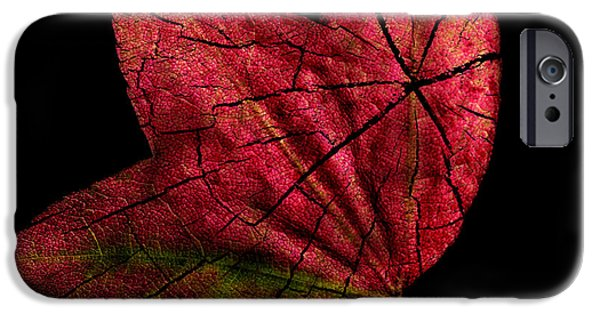 Leaf And Tree IPhone Case by Jon Woodhams