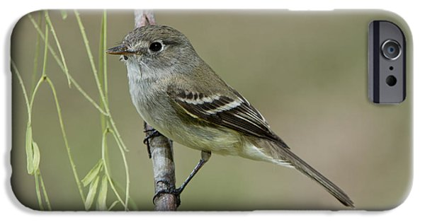 Least Flycatcher IPhone 6s Case by Anthony Mercieca