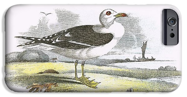 Lesser Black Backed Gull IPhone Case by English School