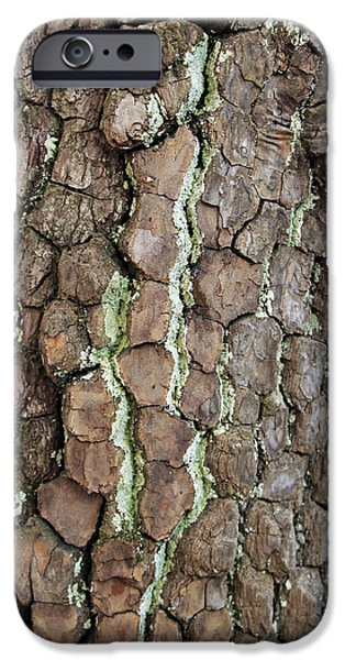 Lichens IPhone Case by Andrea Kappler