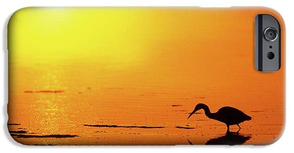 Little Blue Heron (egretta Caerulea IPhone Case by Richard and Susan Day