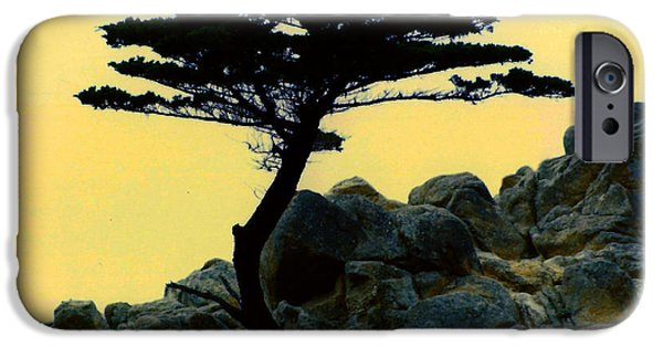 Lone Cypress Companion IPhone Case by Barbara Snyder