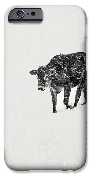Lost Calf Struggling In A Snow Storm IPhone Case by Edward Fielding