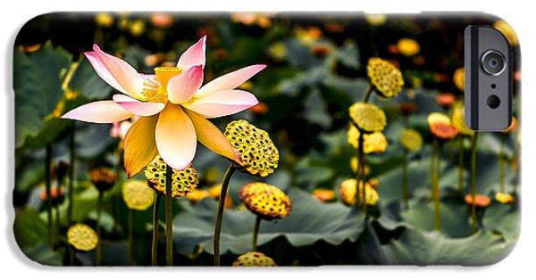 Lotuses IPhone Case by Jon Woodhams