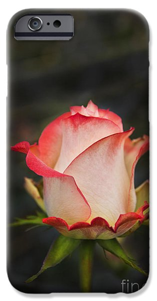 Love Is A Rose II IPhone 6s Case by Al Bourassa