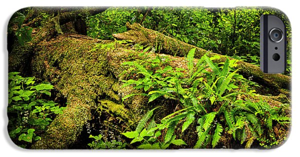 Lush Temperate Rainforest IPhone Case by Elena Elisseeva