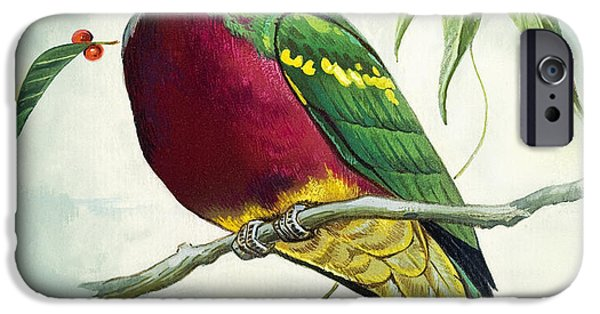 Magnificent Fruit Pigeon IPhone 6s Case by Bert Illoss