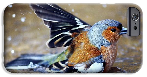 Male Chaffinch Bathing IPhone Case by Colin Varndell