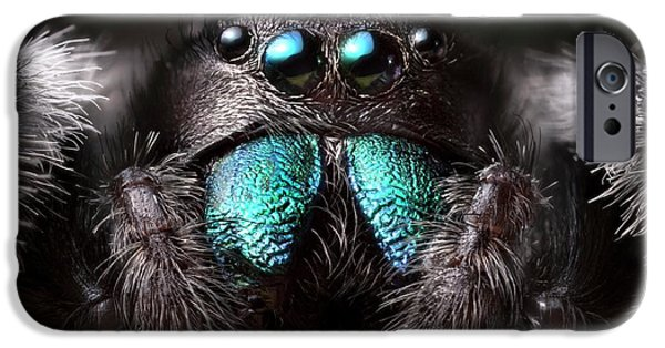 Male Regal Jumping Spider IPhone Case by Alex Hyde