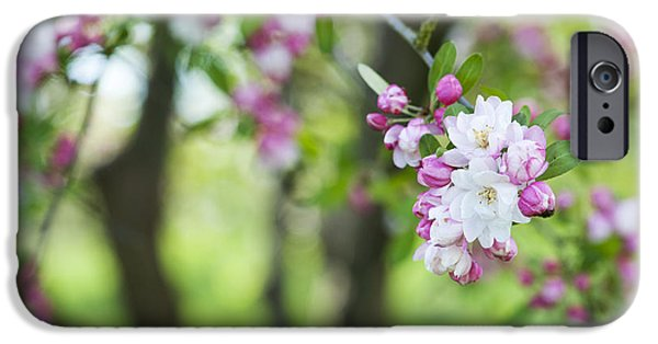 Malus Snowcloud Blossom IPhone Case by Tim Gainey
