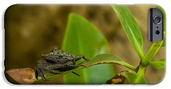Mangrove Crab IPhone Case by Nancy L Marshall