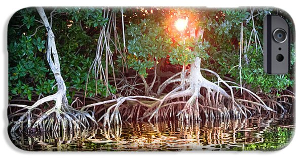 Mangrove Sunset IPhone Case by Karen Wiles