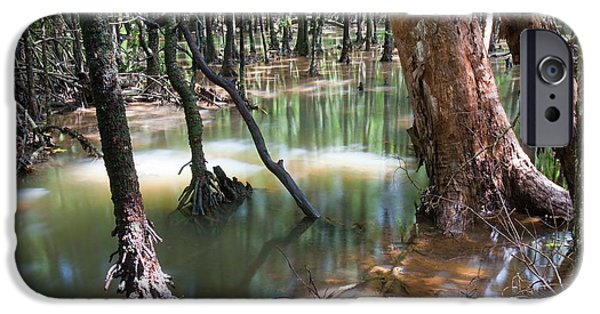 Mangrove Trees IPhone Case by Ashley Cooper