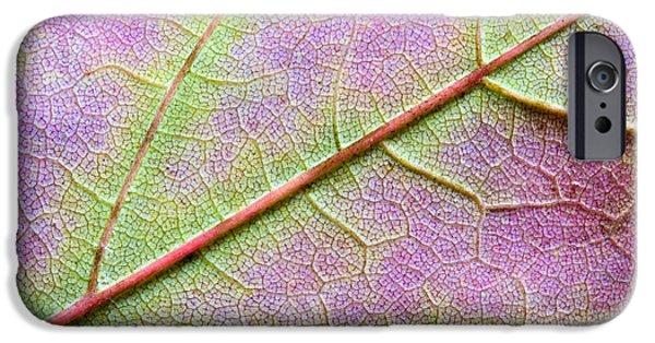 Maple Leaf Macro IPhone Case by Adam Romanowicz