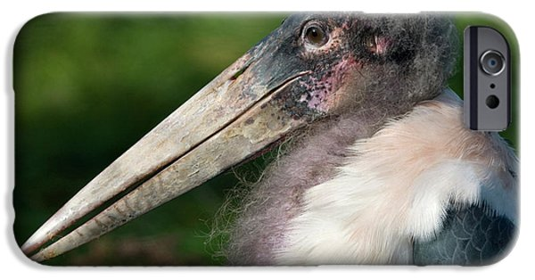 Marabou Stork IPhone 6s Case by Nigel Downer