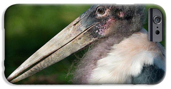 Marabou Stork IPhone 6s Case by Nigel Downer