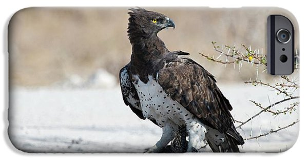 Martial Eagle With Live Guinea Fowl Prey IPhone Case by Tony Camacho