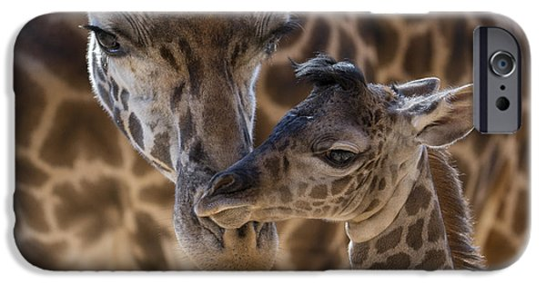 Masai Giraffe And Calf IPhone Case by San Diego Zoo