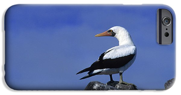 Masked Booby Bird IPhone 6s Case by Thomas Wiewandt