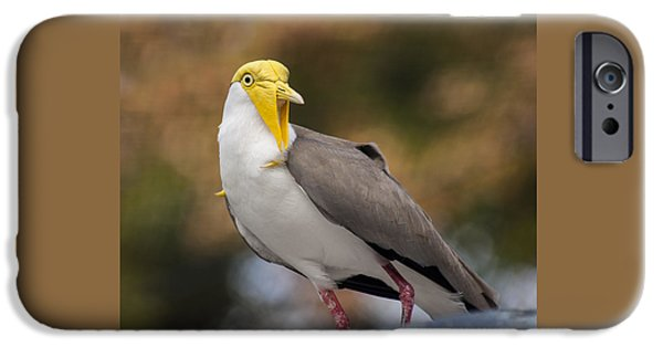 Masked Lapwing IPhone 6s Case by Carolyn Marshall